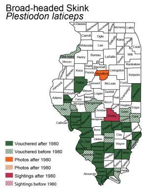 bone-headed skink Illinois map