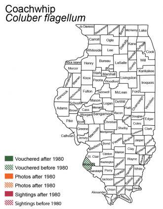 Illinois distribution map of coachwhip
