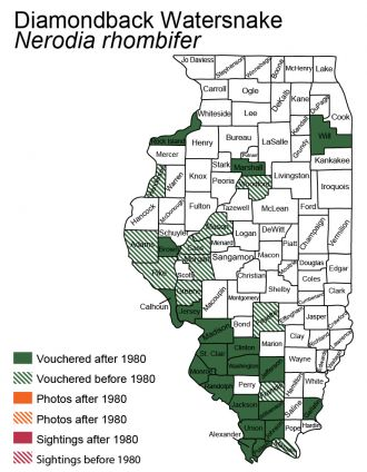 Illinois distribution of diamond-backed watersnake