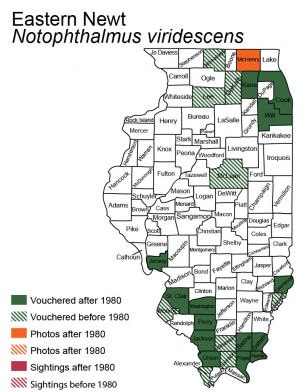 map of eastern newt distribution in Illinois