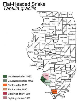 flat-headed snake distribution in Illinois