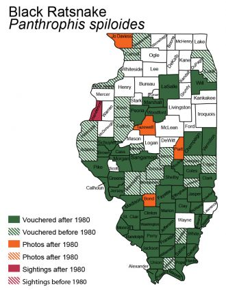 Illinois distribution of gray ratsnake