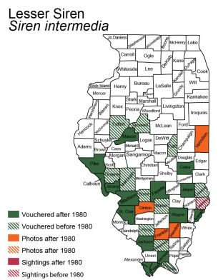 map of lesser siren distribution in Illinois