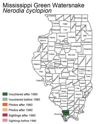 mississippi green watersnake distribution in Illinois