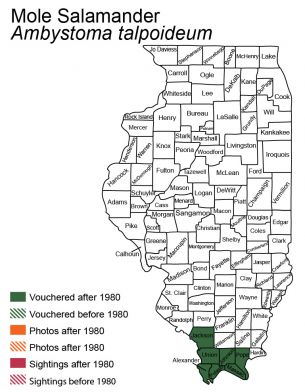 map of mole salamander distribution in Illinois