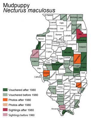 map of mudpuppy distribution in Illinois
