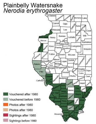 Illinois distribution of plain-bellied watersnake
