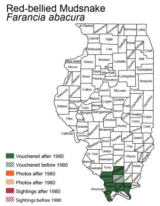 Illinois distribution of red-bellied mudsnake