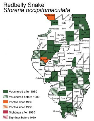 Illinois distribution of red-bellied snake