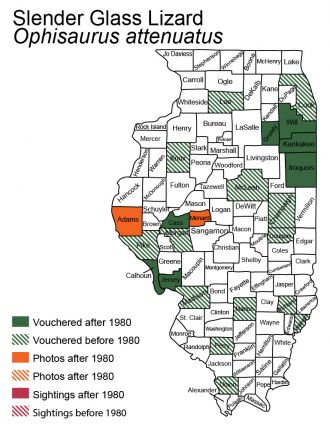 map of slender glass lizard distribution in Illinois