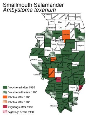 map of small-mouthed salamander distribution in Illinois