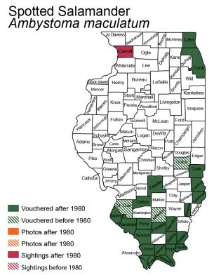 map of spotted salamander distribution in Illinois