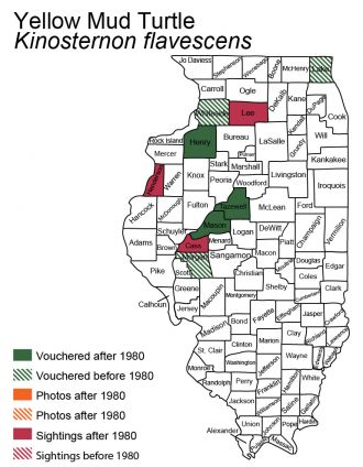 map of yellow mud turtle distribution in Illinois