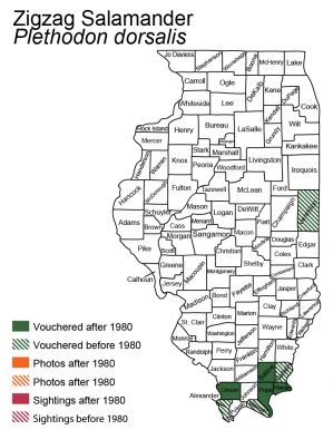 distribution map of zigzag salamander in Illinois
